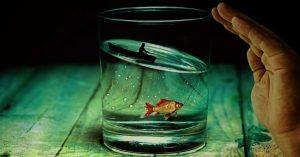 Kompetencje metodyka – temat rzeka…